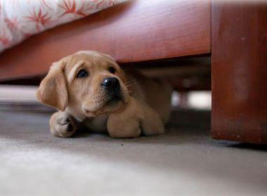 Estudo associa convivência com cachorro a menor risco de morte