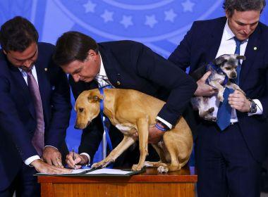 Bolsonaro defende vacina obrigatória apenas para cachorro