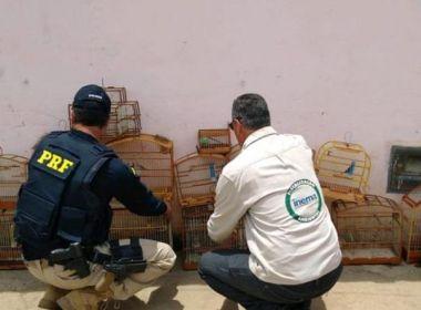 Vitória da Conquista: PRF apreende 58 aves silvestres em cativeiros clandestinos