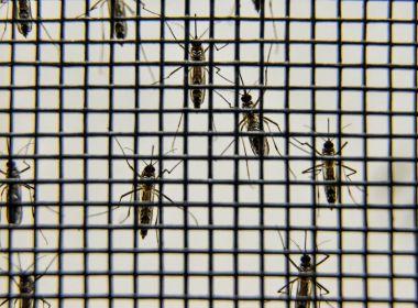 Região de Guanambi registra 4 mortes com suspeita de dengue hemorrágica