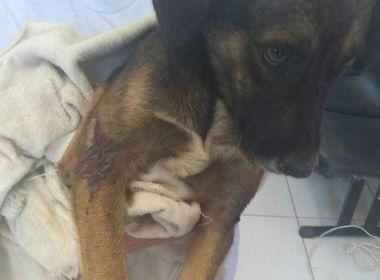 LEM: Idoso é preso acusado de arrastar cachorro amarrado em carro