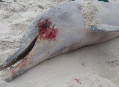 Itaparica: Golfinho é encontrado morto; animal pode ter ficado preso em rede