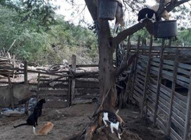 Cel João Sá: Mais de 100 gatos foram levados por enxurradas; ração acaba nesta quarta
