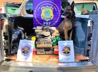 Juazeiro: Cão farejador encontra 30 kg de substância semelhante a cocaína
