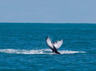 'É preciso lutar bastante', diz biológo contrário à exploração de petróleo perto de Abrolhos