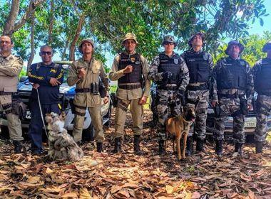 PM de Valença tem os únicos cães altamente certificados para busca de pessoas no Norte-NE