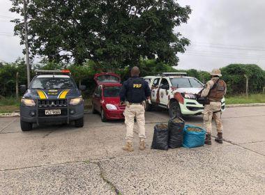 Polícia Militar apreende três sacos de maconha em barreira sanitária na BR-116