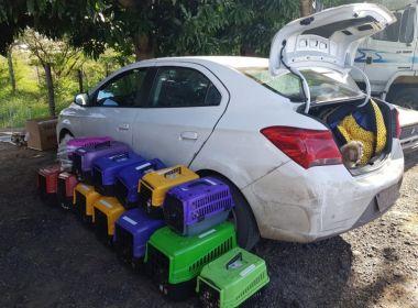 PRF apreende 66 filhotes de cachorro em porta-malas; animais seriam vendidos em Salvador