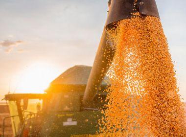 Safra baiana de grãos deve colher 9,9 mi de toneladas em 2020, estima pesquisa