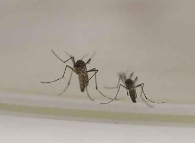Itabela: Sesab já confirma 42 casos de malária; quase 200 exames serão analisados