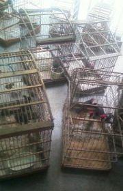 Polícia apreende 80 animais silvestres e prende dois suspeitos em Feira de Santana