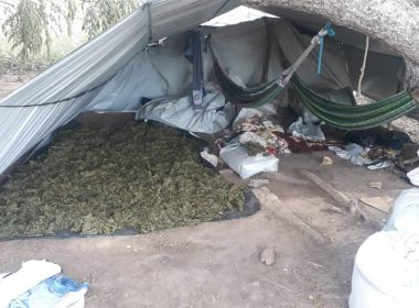 Polícia encontra mais 125 mil pés de maconha no interior da Bahia