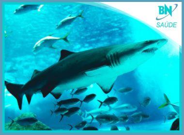 Mais de 480 mil tubarões podem morrer durante produção de vacinas contra a Covid-19