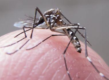 Número de mortes por dengue no país em 2019 já é o dobro do registrado em 2018