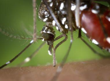 Brasil registrou em três meses mais de meio milhão de casos de dengue