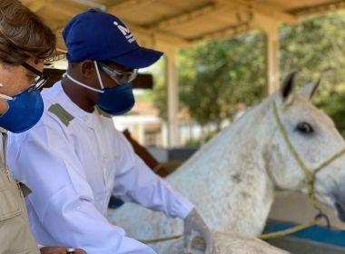 Anticorpos em soros produzidos por cavalos são considerados potentes contra Covid-19