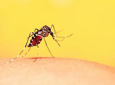 Bahia tem redução de 60% a 85% dos casos de Dengue, Zika e Chikingunya em 2021