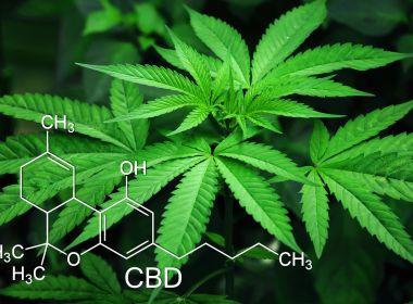 Avisa altera norma para otimizar importação de produtos de Cannabis